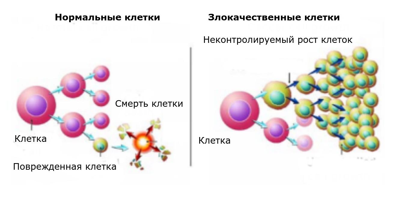 Сравнение нормальных и злокачественных клеток