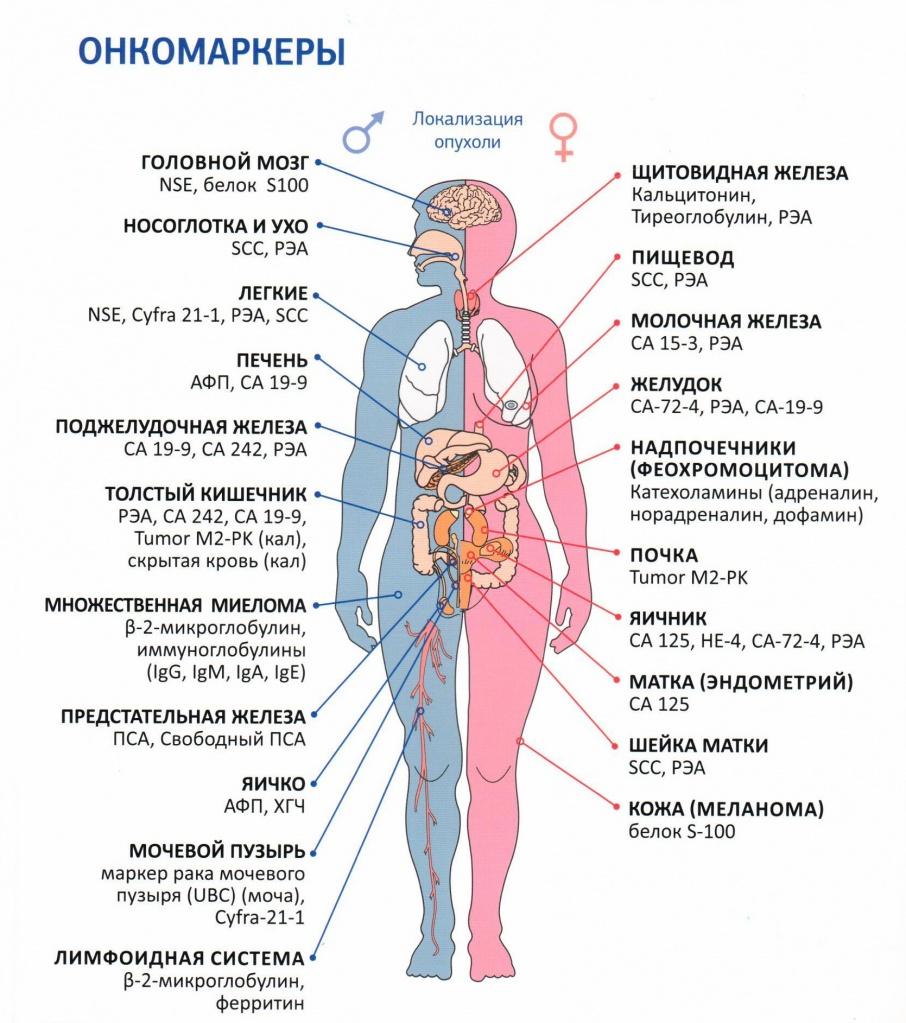 11 главных онкомаркеров при онкологии рака легких