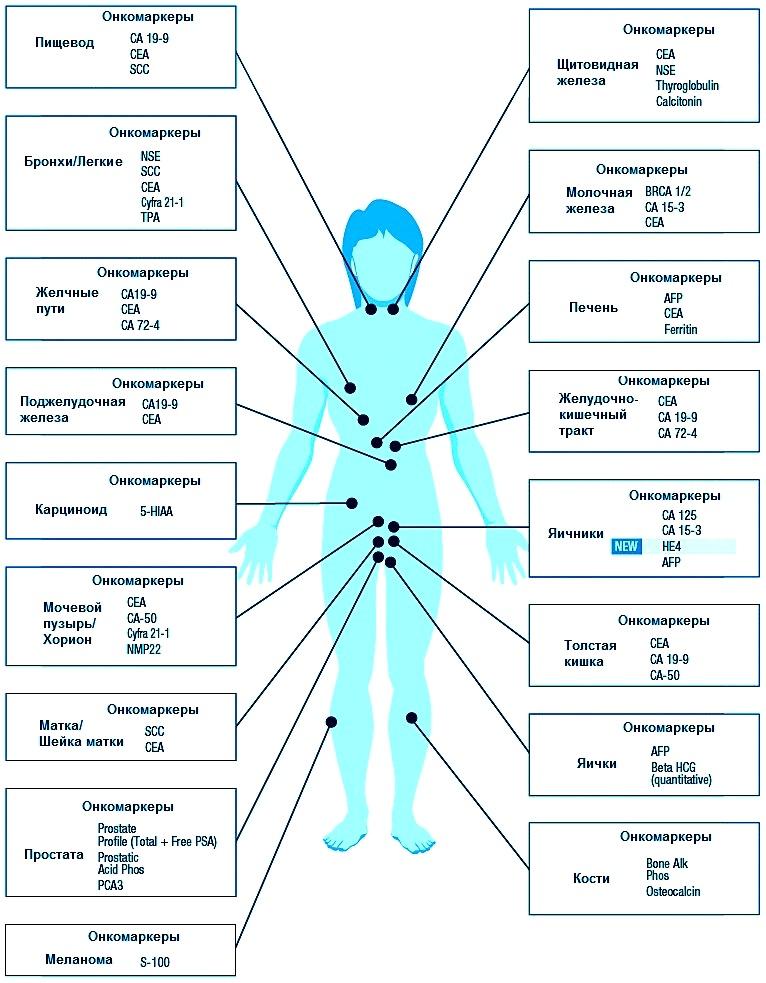 Диагностика рака при подозрении: все про анализы и методы обследования