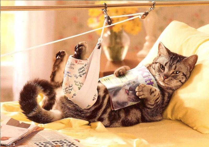 Кот в больничной койке