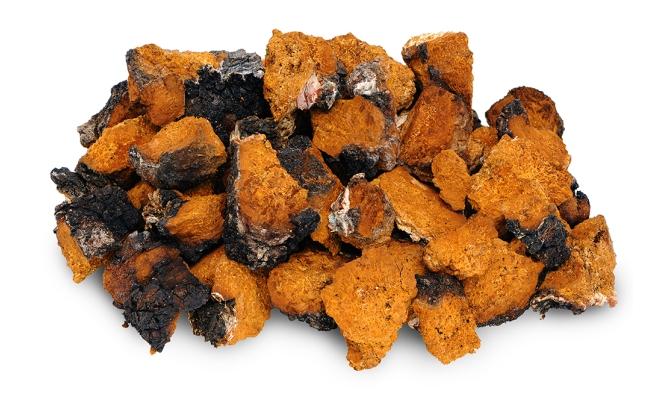 Самый волшебный гриб от онкологических заболеваний: Чага