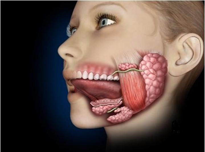 Рак слюнной железы: особенности опасной патологии