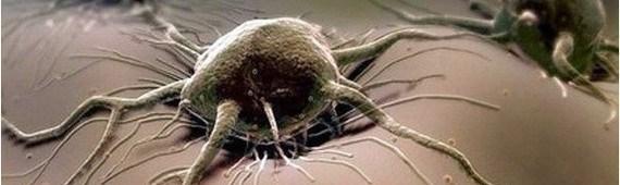 Почему рак называется «раком»: откуда взялось название?